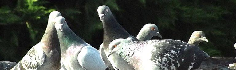Προστασία από Πτηνά